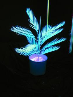 Noname Kentia Palmtree 3´/90cm uv-white