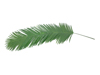 Coconut king palm branch, artificial, 180cm