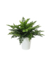 Fern bush in pot, artificial plant, 51 leaves, 48cm