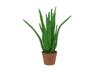 Europalms Aloe Vera Plant, artificial plant, 63cm