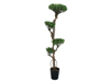 Bonsai tree, multi trunk, artificial plant, 170cm