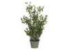 Evergreen shrub, artificial, 120cm