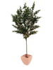 Europalms Olive tree with fruits, artificial, 250cm