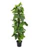 Pothos plant, artificial, 180cm