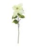 Poinsettia, cream, 70cm