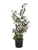 Olive tree, artificial plant, 68 cm
