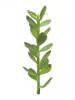Europalms Money tree shoot, artificial plant, 30cm