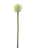 Allium spray, artificial, cream, 55cm