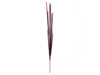Magic Onion Stalks, artificial, rose, 134cm