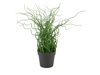 Corkscrew grass in brown pot, PE, artificial plant, 38cm