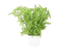 Forest fern in pot, artificial plant, 25 cm