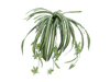 Europalms Spider plant, artificial, 60cm