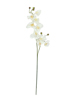 Orchid branch, artificial, cream-white, 100cm