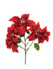 Poinsettia bush, red, 60cm