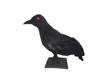 Europalms Halloween Raven 30x11x23cm