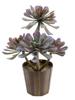 Succulent Aeonium plant, artificial, 30cm