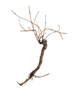 Grapevine 150cm