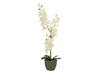 Orchid, artificial plant, cream, 80cm