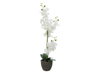 Orchid, artificial plant, white, 80cm